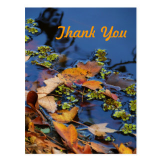 Thank You Postcard