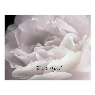 Thank You Postcard, Pale Pink Rose