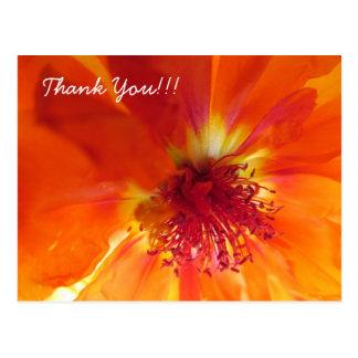Thank You Postcard with orange flower