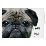 Thank You pug greeting card