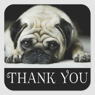 Thank You Pug Puppy Dog Black & White Square Sticker