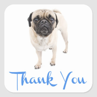 Thank You Pug Puppy Dog Greeting Sticker / Label