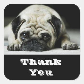 Thank You Pug Puppy  Dog Greetings Sticker