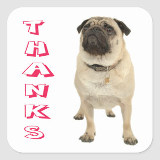 Thank You Pug Puppy Dog Stickers / Seals