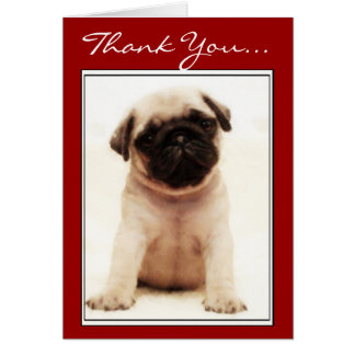Thank You Pug puppy greeting card