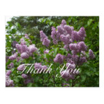 Thank You-Purple Lilac Bush Postcard