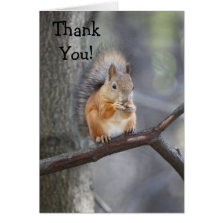 Thank You Red Squirrel Greeting Card