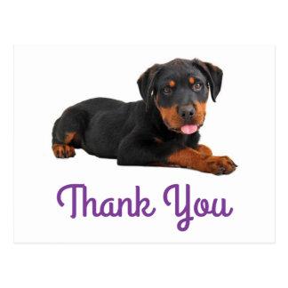 Thank You Rottweiler Puppy Dog Greeting Postcard
