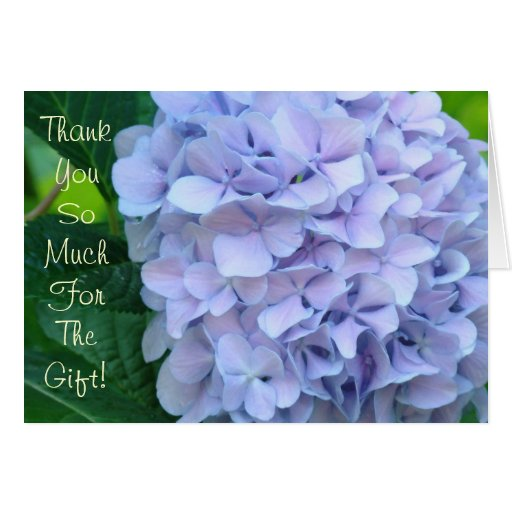 Thank You So Much for the Gift! Cards Hydrangeas