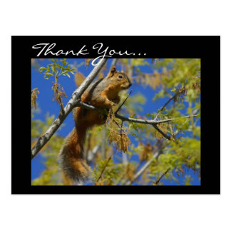 Thank You Squirrel postcard