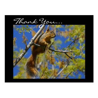 Thank You Squirrel postcard