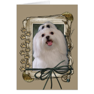 Thank You - Stone Paws - Maltese Greeting Cards