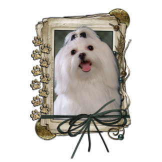 Thank You - Stone Paws - Maltese Cutout