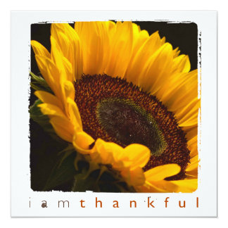 Thank You sunflower photography flat cards