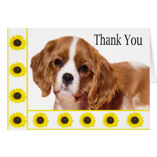 Thank You Cavalier King Charles