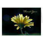 Thank You Sunlit Yellow Daisy Beautiful Flowers Stationery Note Card