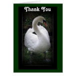 Thank you - swan card