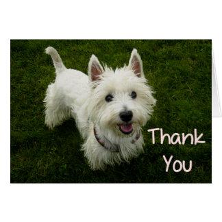 thank_you_west_highland_terrier_puppy_dog_card r981b088ecb3b47529356f2e18bb29460_xvua8_8byvr_324 westie thank you gifts on zazzle