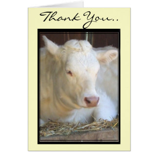 Thank You White cow greeting card