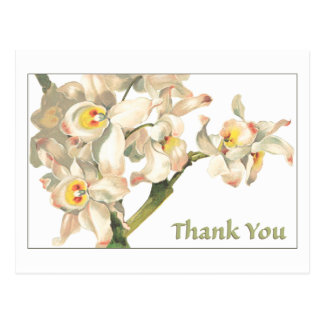 Thank You White Orchids Postcard