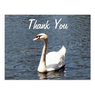 Thank You white swan Postcard