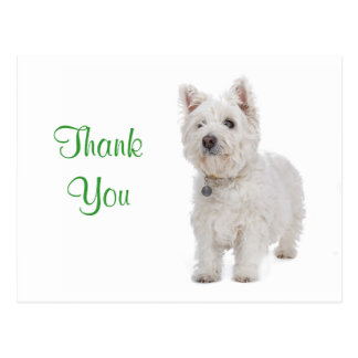 Thank You White Westie Puppy Dog Greeting Postcard