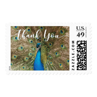 Thank You with Peacock Face & Feathers Photo, 1 Postage