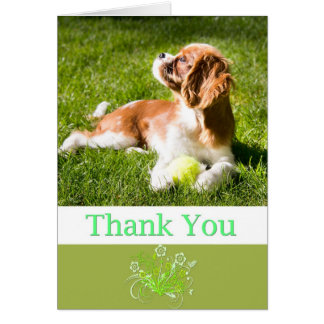 Thank You With Puppy Cavalier King Charles Card