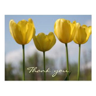 Thank You Yellow Tulips Postcard