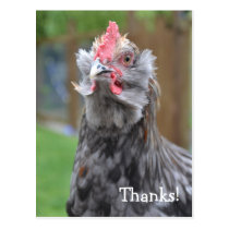 Thanks from a happy rooster postcard