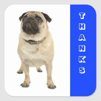 Thanks Greeting Pug Puppy Dog Stickers