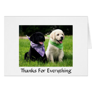 Thanks  Labrador Retriever Puppies Greeting Card