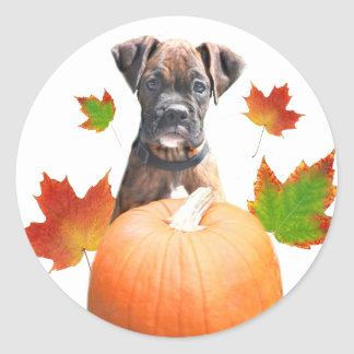 Thanksgiving boxer puppy stickers