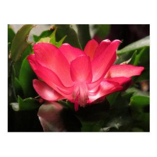 Thanksgiving Cactus Flower Postcard