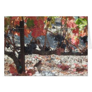 Thanksgiving Card: Hummingbird in Vineyard Card