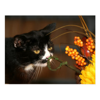 Thanksgiving cat postcard