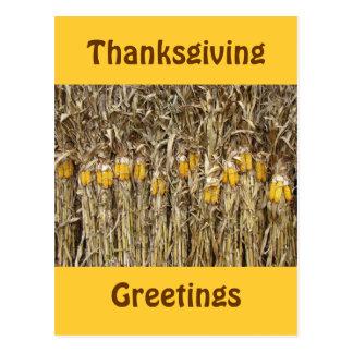 Thanksgiving Dried Corn Stalk Decorations Post Card