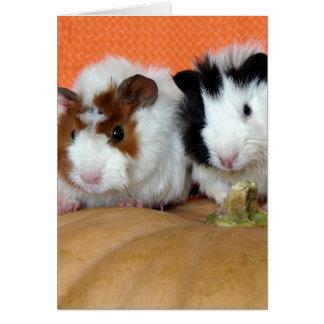 Thanksgiving Guinea Pigs On Pumpkin Card