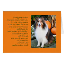 Thanksgiving is...Sheltie Card