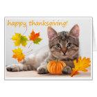 Thanksgiving kitten card