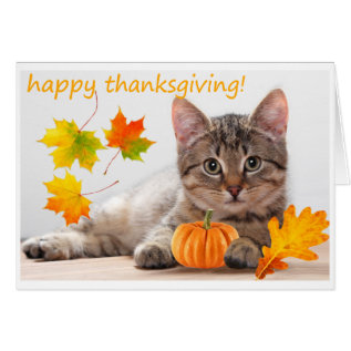 Thanksgiving Kitten Card at Zazzle