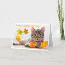 Thanksgiving kitten holiday card