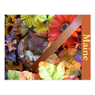 Thanksgiving Kitty Cat Sleeping, Flower Basket Postcard