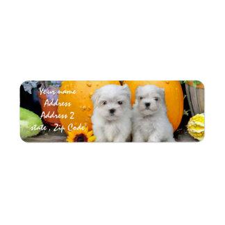 Thanksgiving Maltese puppies Return Address Label