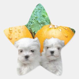 Thanksgiving Maltese puppies Star Sticker
