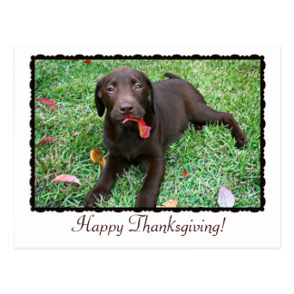Thanksgiving Postcard with Chocolate Lab