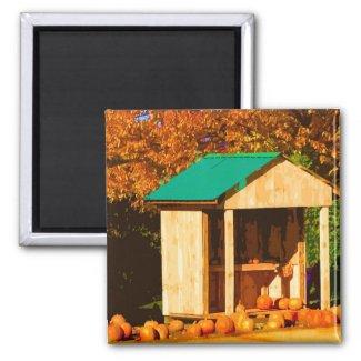 Thanksgiving Pumpkins magnet
