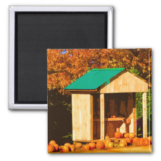 Thanksgiving Pumpkins Magnet