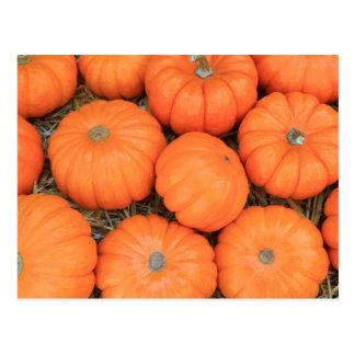 Thanksgiving Pumpkins symbols Postcared Postcard