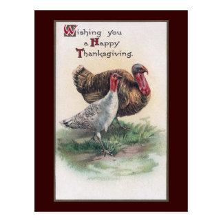Thanksgiving Turkeys Postcard